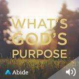 abide-godspurpose